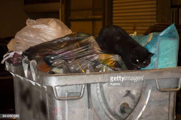 Europe, Greece, Athens Area, Larissa, 2017: View Of Black Cat On Rubbish Bin At Night