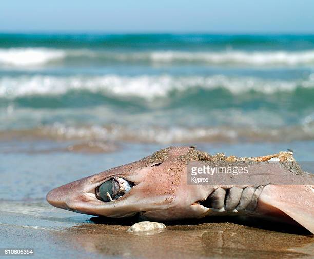 Europe, Greece, View Of Dead Shark, With Fin Cut Off, Washed Up On Greek Beach