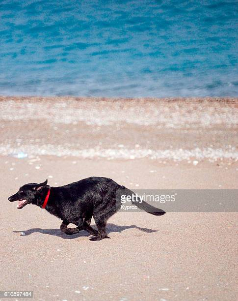 Europe, Greece, View Of Dog Running On Beach