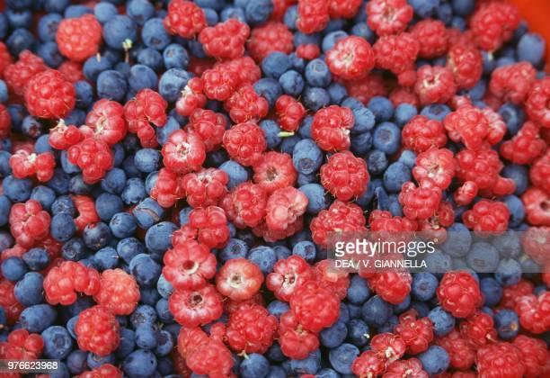 European blueberries Ericaceae and raspberries Rosaceae Dolomiti Bellunesi national park Veneto Italy
