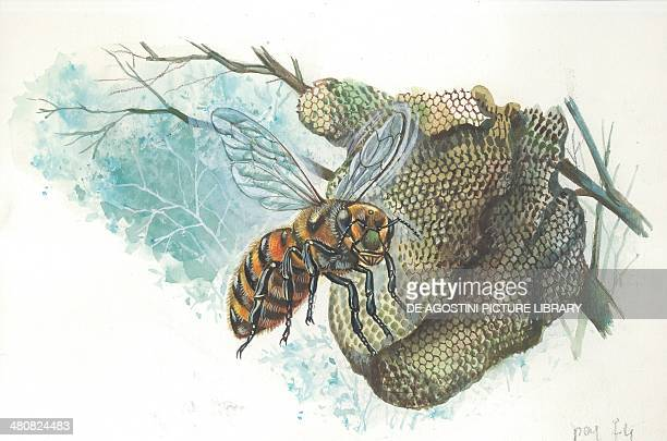 European honey queen bee at the hive illustration