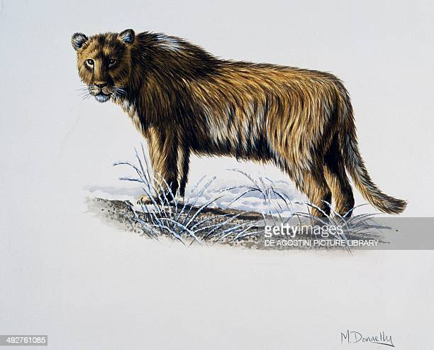 European or Eurasian cave lion Felidae Late Pleistocene Artwork by Mike Donnelly