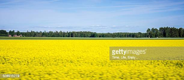 European rural scenery