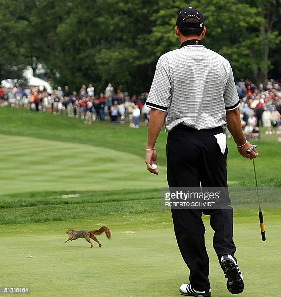 European Ryder Cup team Sergio Garcia of Spain chases a squirrel off the green during his Four-Ball match 17 September, 2004 at Oakland Hills Country...