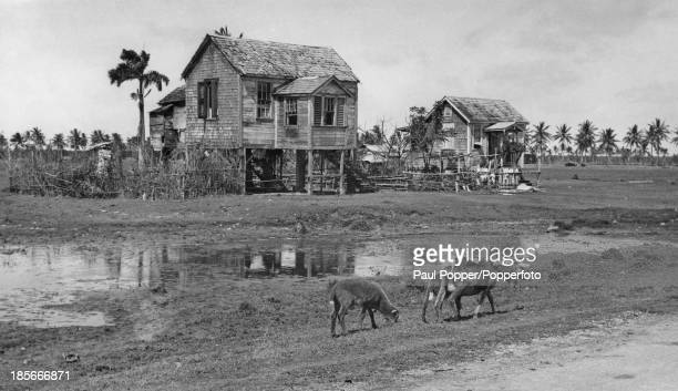 Europeanstyle pile dwellings on the road between Bel Air and the village of Pleasance near Georgetown British Guiana circa 1935