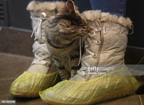 Europe's biggest Cat Cafe opened in St Petersburg on January 12 Russia The cat cafe called ''Cat Republic'' home to 60 felines including the ones...
