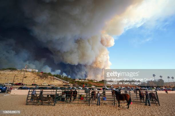 Evacuated horses are corralled on Zuma beach as the Woolsey Fire burns in the distance in Malibu on Friday Nov 9 2018