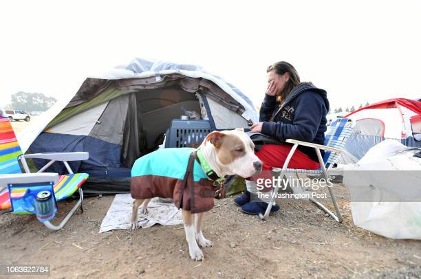 Evacuee Brenda Wilson of Magalia sits outside her tent with her dog Scooby at an evacuee encampment at a Walmart parking lot in Chico California on...