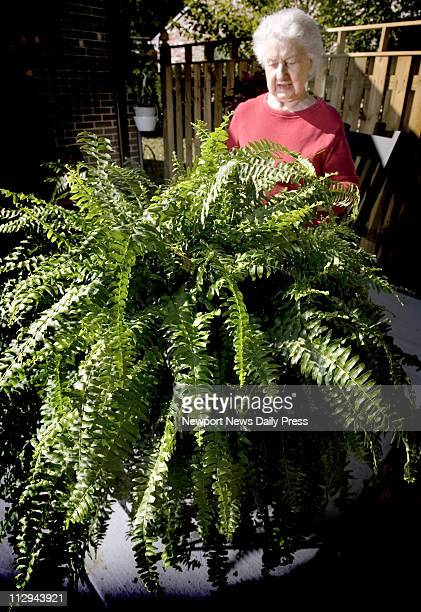 Evelyn Good Kingan Edwards has an 114yearold Boston fern that's been in their family for all that time handed down through generations in Newport...