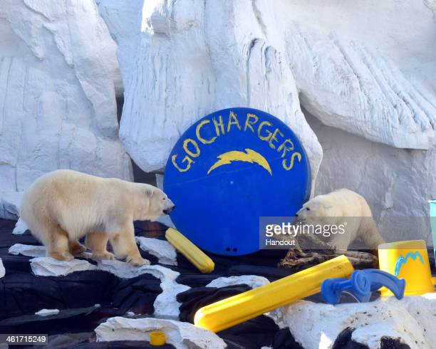 Even the polar bears at SeaWorld San Diego are bolting up for Sunday's Chargers game against the Broncos In fact Snowflake and Szenja are 'paws'ibly...