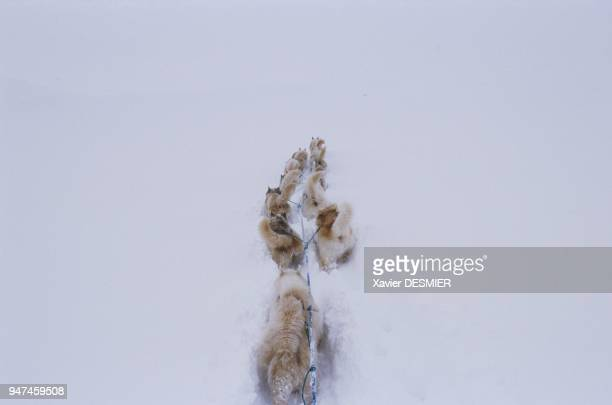 Even when accompanied by some of the most renowned local Inuit hunters and guides travel in Eastern Greenland can still prove to be dangerous A snow...