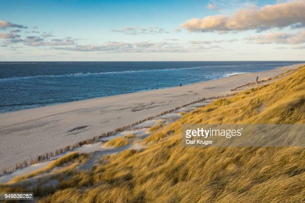 evening at the sea, dunes with beach grass (ammophila arenaria), west beach, sylt, north frisia, schleswig-holstein, germany - fischland darss zingst photos et images de collection