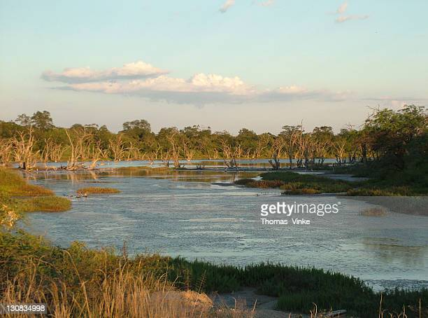 evening at typical salty marshes, gran chaco, paraguay - paraguay foto e immagini stock