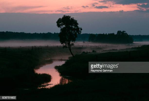 evening fog on river - bialowieza forest stock pictures, royalty-free photos & images