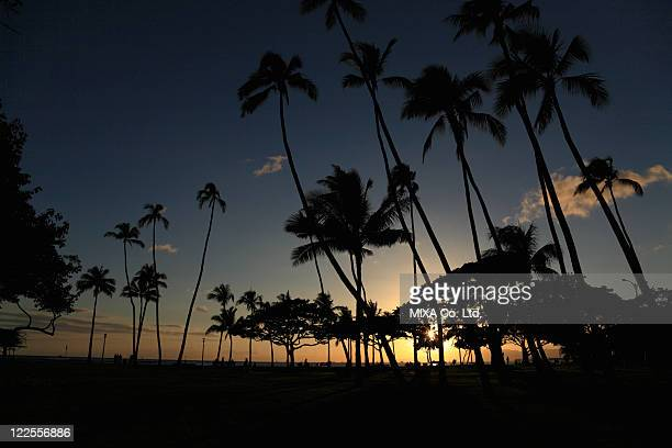Evening Glow And Silhouette Of Palm Tree, Honolulu, Hawaii, U.S.A.,