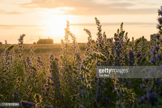 evening in dungeness uk southern england. - cottage stock pictures, royalty-free photos & images