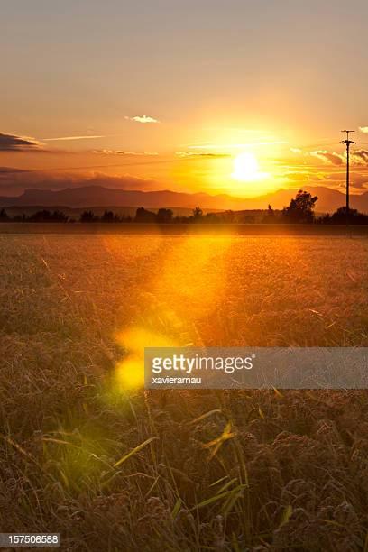 夜には、田園