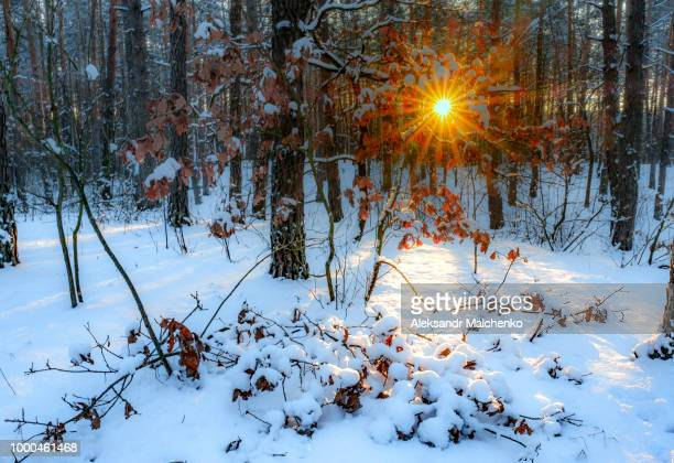 Evening in the winter forest