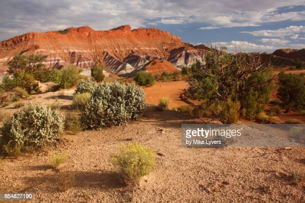 Evening light on high desert foliage, Paria