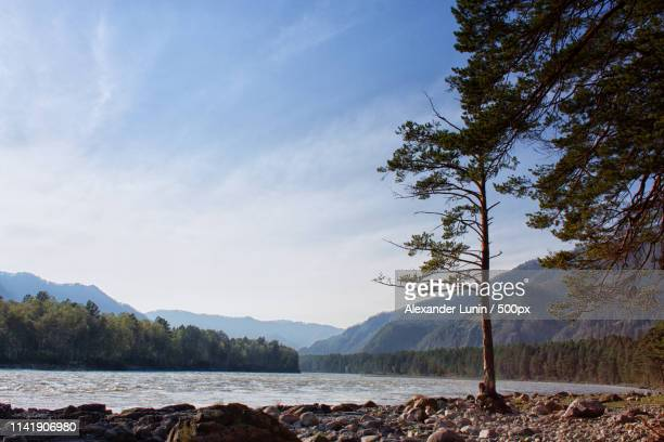 evening on katun river - lunin stock photos and pictures