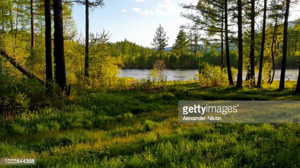 evening on the banks of the taiga river. - tundra stock-fotos und bilder