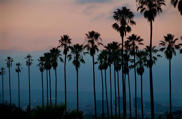 Evening palms with city background