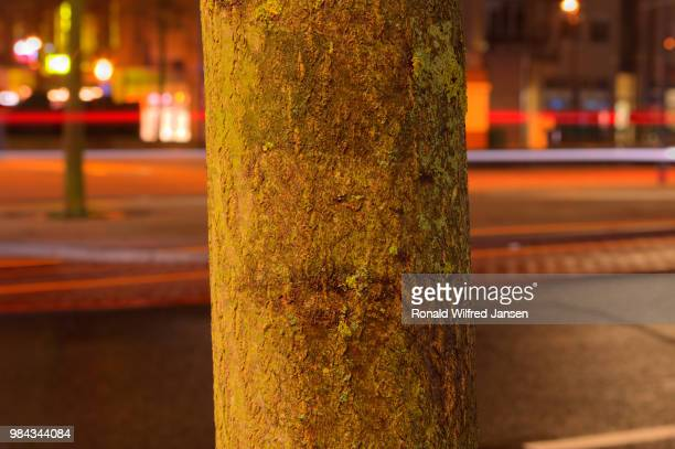 evening shot of a portion of a tree at the roundabout at the cross in hoogeveen, netherlands - hoogeveen stock pictures, royalty-free photos & images