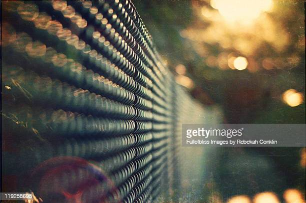 Evening sunflare fence
