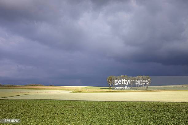 evening sunlight and storm clouds with row of trees - vaud canton stock pictures, royalty-free photos & images