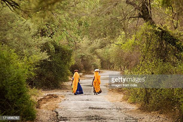 evening walk - ranthambore national park stock pictures, royalty-free photos & images
