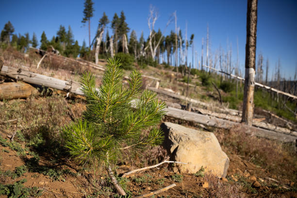 CA: Scientists Are Trying to Make California Forests More Fire Resilient