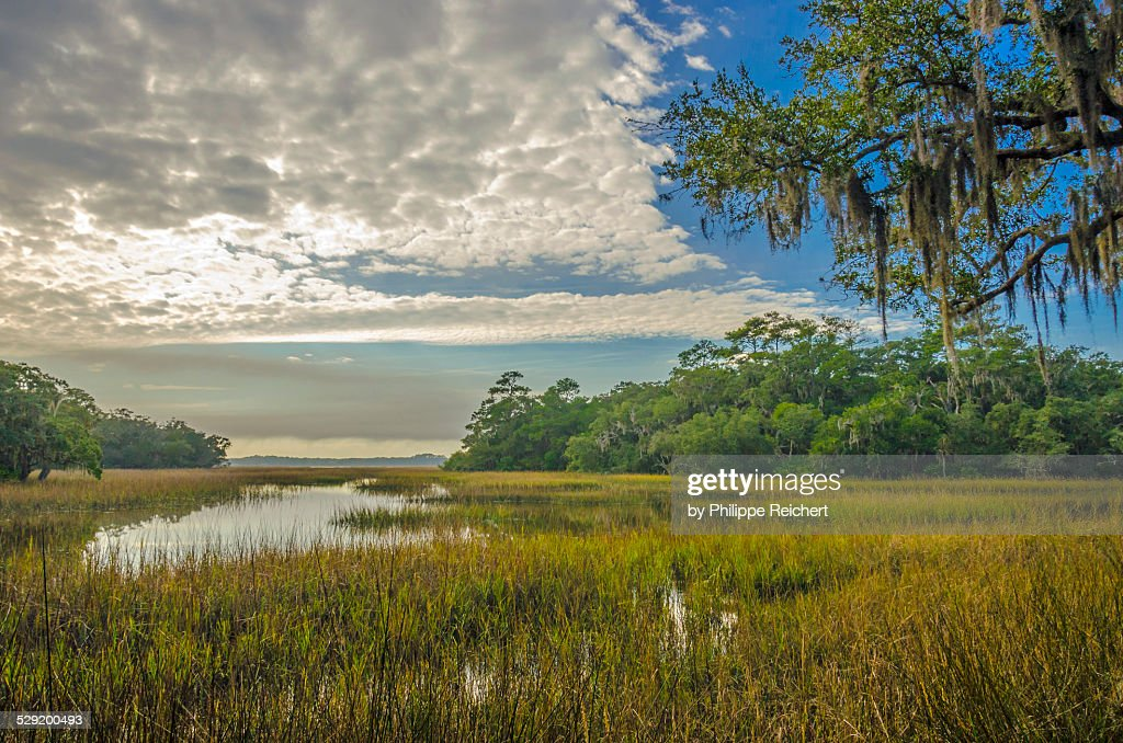 Florida Everglades - Environmental degradation and development endanger the Everglades and its immense biodiversity.