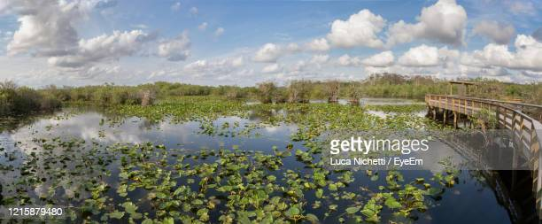 everglades national park anhinga trail landscape, florida - anhinga_trail stock pictures, royalty-free photos & images