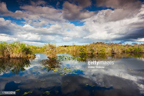 everglades national park, florida, exterior view - anhinga_trail 個照片及圖片檔