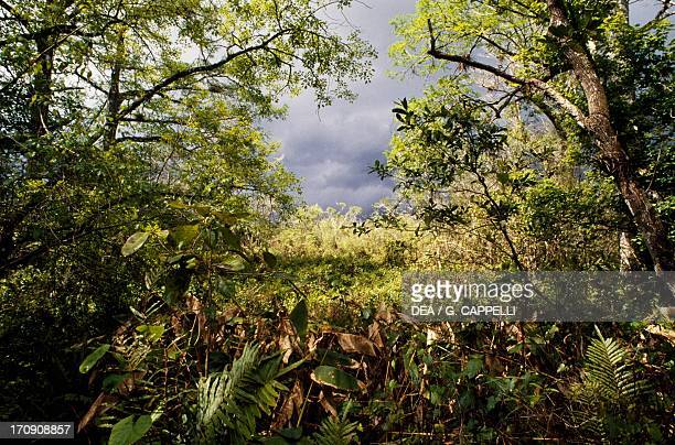 bush travels to florida ストックフォトと画像 getty images