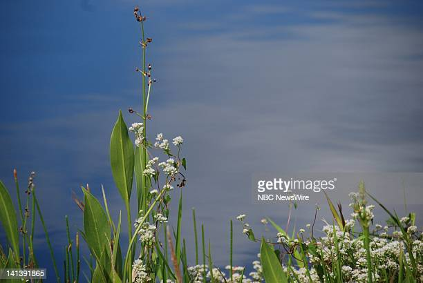 NBC NEWS Everglades National Park Pictured Plant life along the Anhinga Trail of Everglades National Park in Florida on October 19 2008 Photo by...
