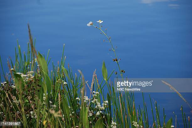 Everglades National Park -- Pictured: Plant life along the Anhinga Trail of Everglades National Park in Florida on October 19, 2008 -- Photo by:...