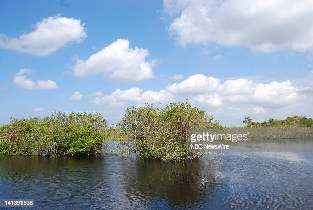 Everglades National Park -- Pictured: Scenic view along the Anhinga Trail of Everglades National Park in Florida on October 19, 2008 -- Photo by:...