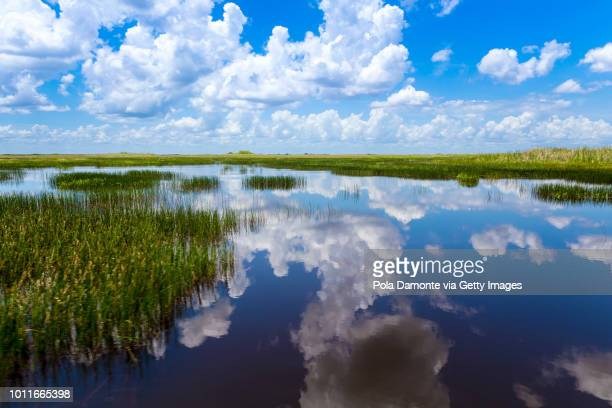 everglades natural landscape - florida usa stock-fotos und bilder