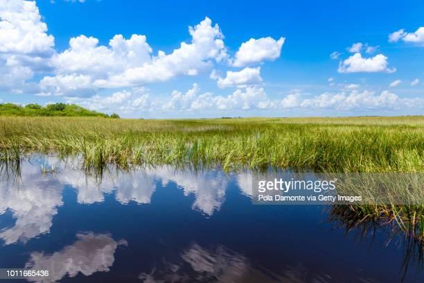 everglades natural landscape - crocodile photos et images de collection