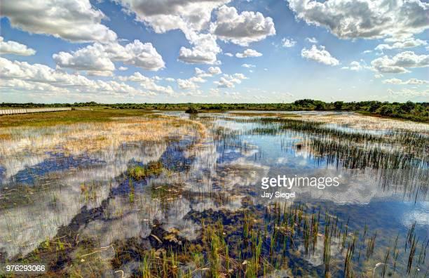 Everglades Reflections