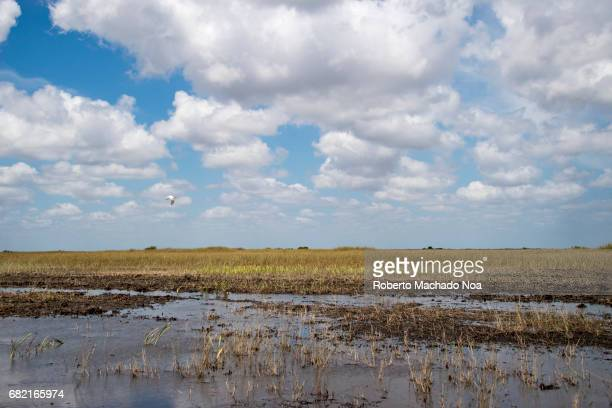 Everglades swamp channels without mangroves and reflections of clouds in the water The Everglades is a natural region of tropical wetlands in the...