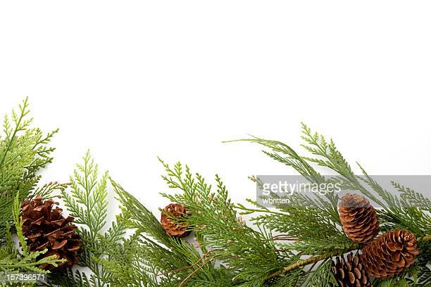 evergreen border with pine-cones - christmas garland stock pictures, royalty-free photos & images