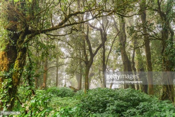 evergreen jungle tropical rainforest