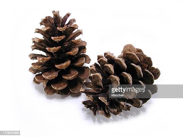 Evergreen Pinecones