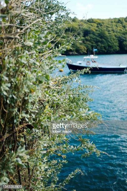 evergreen shrubs overlooking river with boat - truro cornwall stock pictures, royalty-free photos & images