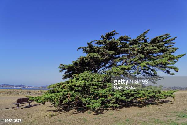 evergreen tree and bench - east bay regional park stock pictures, royalty-free photos & images