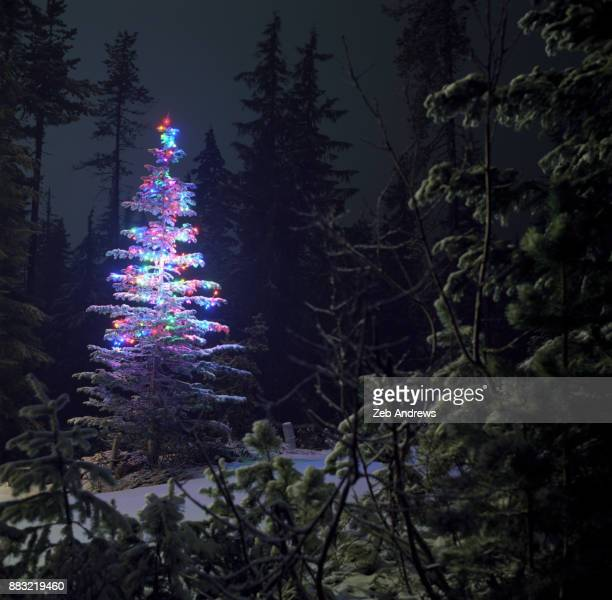 Evergreen tree in snowy forest decorated for Christmas