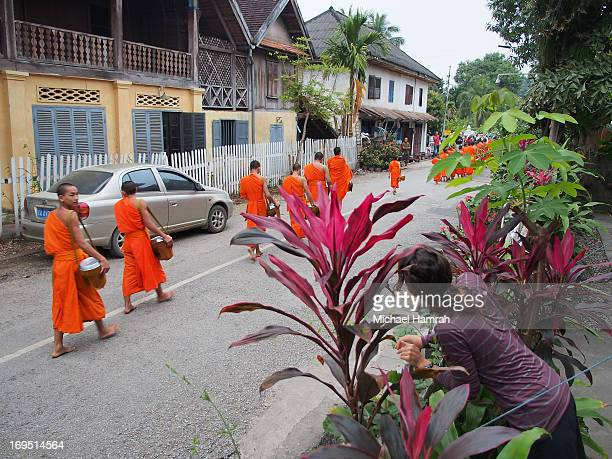 CONTENT] Every morning young monks walk the streets of Luang Prabang to receive alms A western tourists peaks out to view the parade of barefoot...