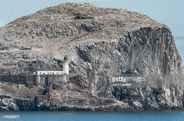 Every year 150,000 Gannets descend on the Bass Rock, an island 5km north-west of the town of North Berwick, East Lothian, Scotland. The volcanic Bass...